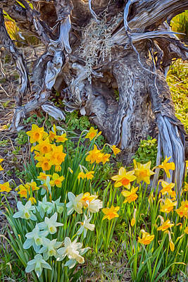 Daffodils And Sculpture Poster