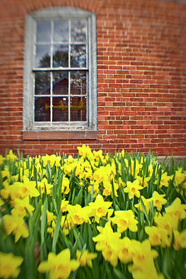 Daffodils In Portsmouth, New Hampshire Poster by Jerry and Marcy Monkman