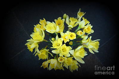Daffodils Reaching Out Poster