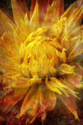 Dahlia Abstract Poster by Garry Gay