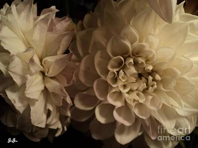 Poster featuring the photograph Dahlia Duo by Geri Glavis