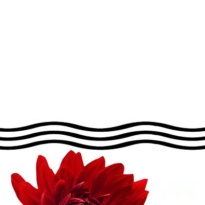 Dahlia Flower And Wavy Lines Triptych Canvas 1 - Red Poster by Natalie Kinnear