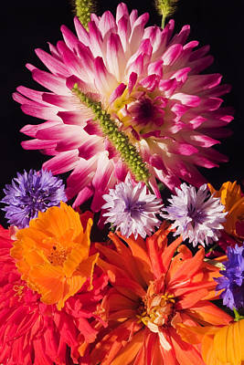 Dahlia Zinnia Bachelor's Buttons Flowers Poster by Keith Webber Jr