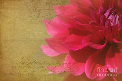 Dahlias Finest Moment Poster by Beve Brown-Clark Photography