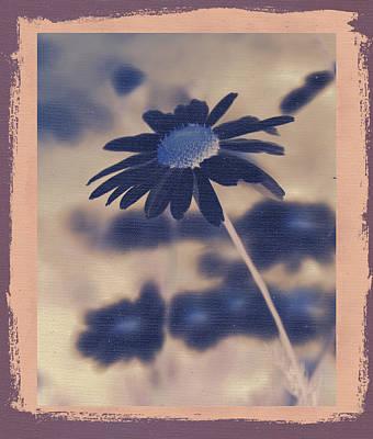 Daisies ... Again - 150ab Poster