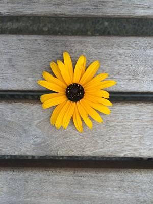 Daisy 3 Poster by Izabela Bienko