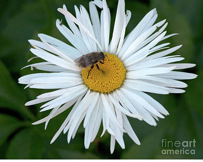 Daisy And Bee Poster