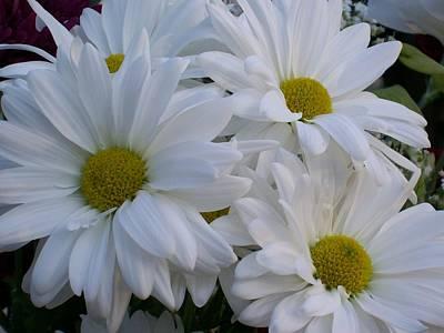 Daisy Bouquet Poster by Belinda Lee