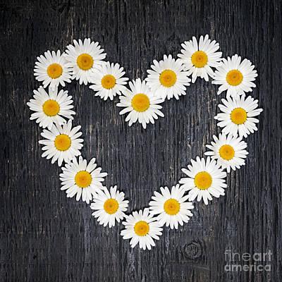 Daisy Heart Poster by Elena Elisseeva