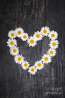 Daisy Heart On Dark Wood Poster by Elena Elisseeva