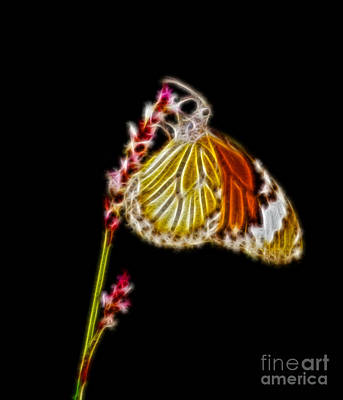 Danaus Genutia Butterfly Fractal Art Poster by Image World