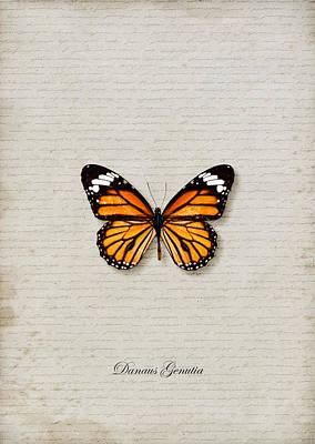 Danaus Genutia Butterfly Poster by Lee Craggs