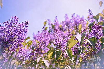 Dance Of The Lilacs Poster