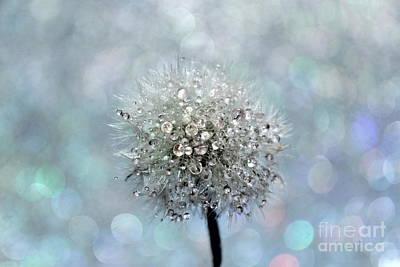 Dandelion Diamonds Poster by Krissy Katsimbras