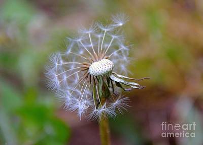 Poster featuring the photograph Dandelion by Lisa L Silva