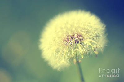 Poster featuring the photograph Dandelion Seed Head by Karen Slagle