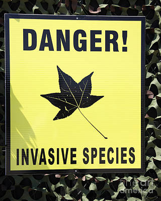 Danger Invasive Species Sign Poster by Ros Drinkwater