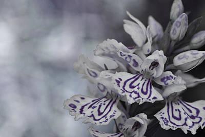 Dark Angel Of Flowers Poster
