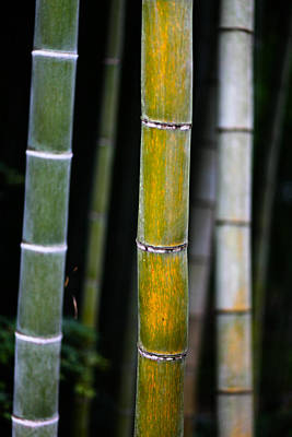 Poster featuring the photograph Dark Bamboo by Brad Brizek