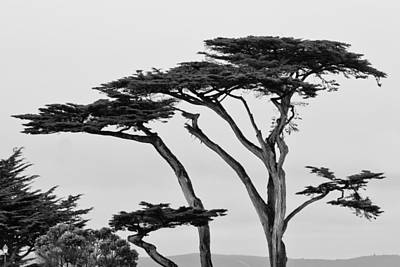 Dark Cypress Poster by Melinda Ledsome