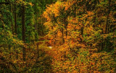 Dark Forest Poster by Dennis Bucklin