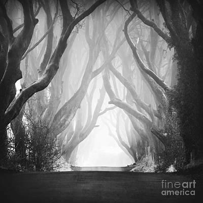 Dark Hedges IIi Poster by Pawel Klarecki