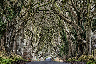 Dark Hedges  Poster by Nigel R Bell