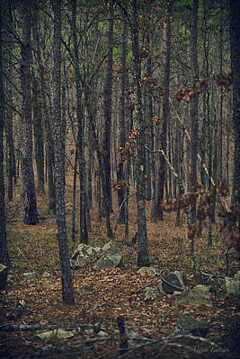 Poster featuring the photograph Dark Woods by Yvonne Emerson AKA RavenSoul