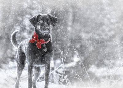 Dashing Through The Snow Poster by Lori Deiter
