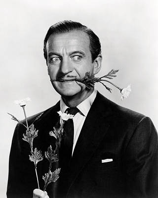 David Niven In Please Don't Eat The Daisies  Poster by Silver Screen