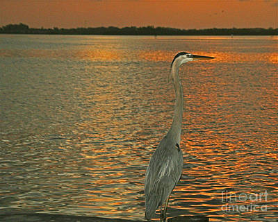 Dawn Greets A Blue Heron Poster by Joan McArthur