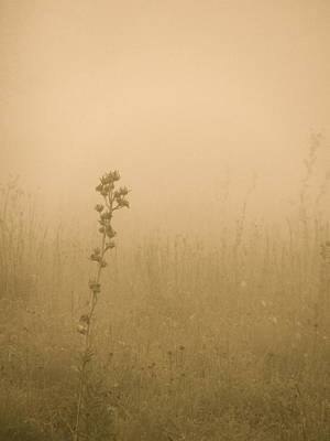 Dawning Mist Poster by Tim Good