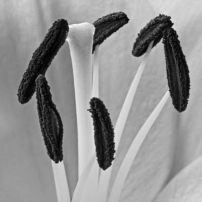 Poster featuring the photograph Day Lily Heart by Dawn Currie
