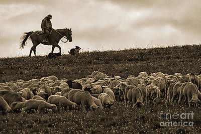 Days End Sheep Herding Poster