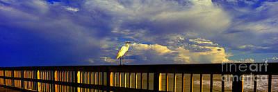 Daytona Beach Fl Bird Sun Glow Pier  Poster