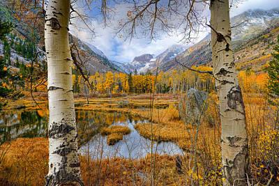 Dazzling Fall Foliage Poster