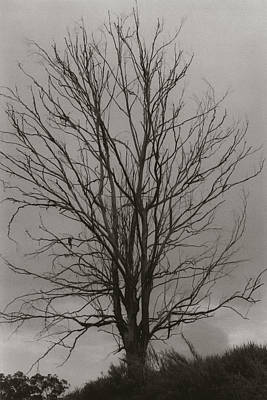 Poster featuring the photograph Dead Tree by Amarildo Correa