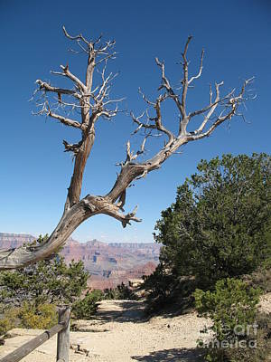 Dead Tree At Grand Canyon South Rim Poster by Christiane Schulze Art And Photography