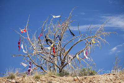 Dead Tree Covered In Womens Bras Poster