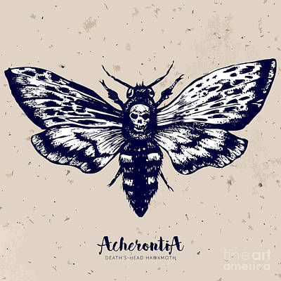 Deaths-head Hawkmoth. Hand Drawn Vector Poster