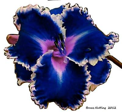 Deep Blue Exotic Flower Poster by Bruce Nutting