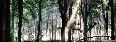 Deep Forest Morning Light Poster by Simon Bratt Photography LRPS