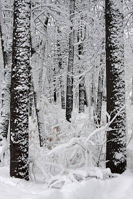 Deep Snow In The Forest Poster by Lynn-Marie Gildersleeve