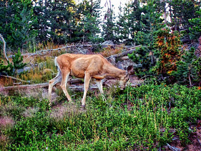 Poster featuring the photograph Deer 1 by Dawn Eshelman