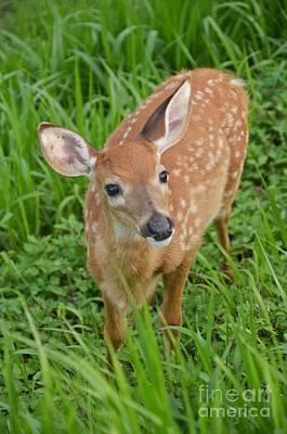 Deer 42 Poster