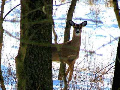 Poster featuring the photograph Deer At Park by Eric Switzer