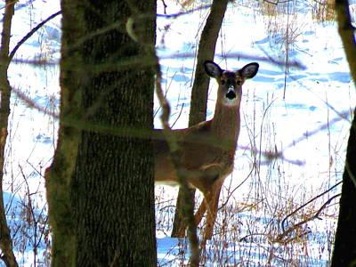 Deer At Park Poster
