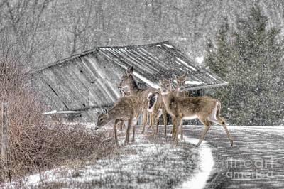 Deer Crossing Ahead Poster