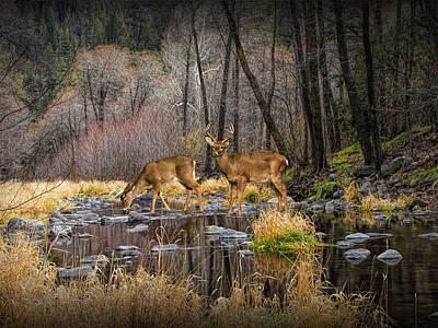 Deer Crossing Poster by Randall Nyhof