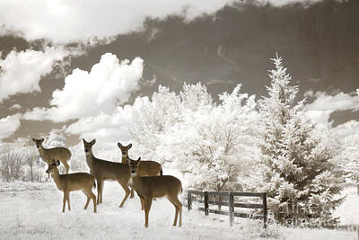 Deer Nature Winter - Surreal Nature Deer Winter Snow Landscape Poster by Kathy Fornal